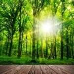 CBD kapljice - kaj je to in kakšne so koristi